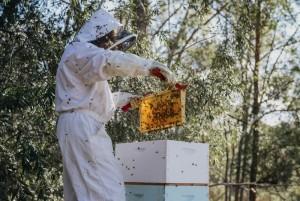 Capers honey
